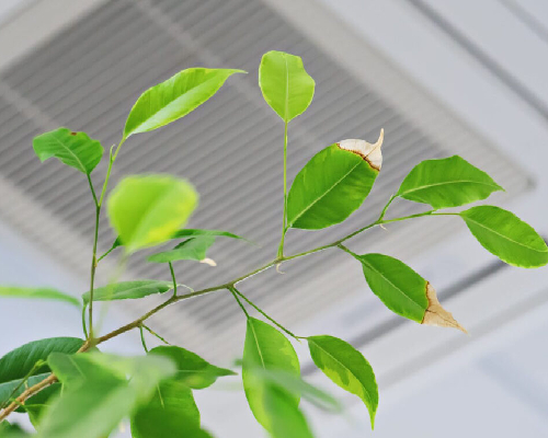 How To Improve Indoor Air Quality In Your Office Building